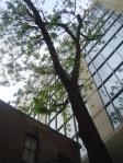 Longhorn Tree